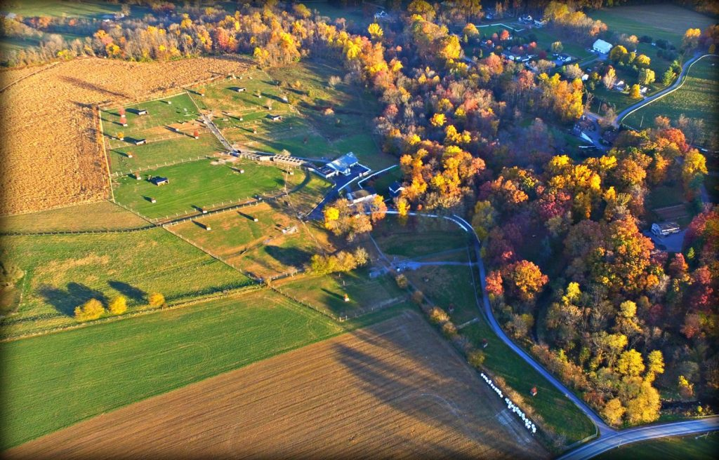 Whitetail Deer Farms