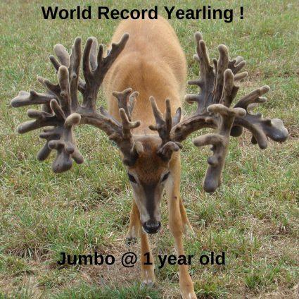 Jumbo at age 1