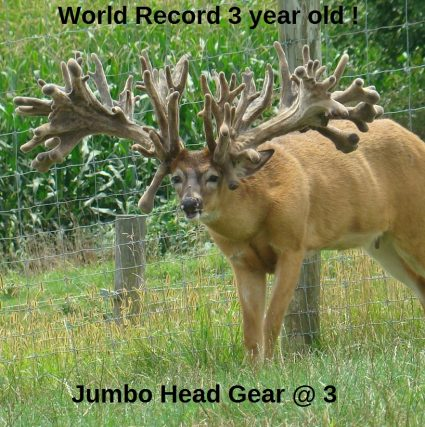 Jumbo Head Gear Breeder Buck
