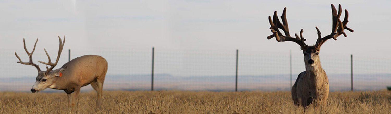 Mule Deer Breeder Banner