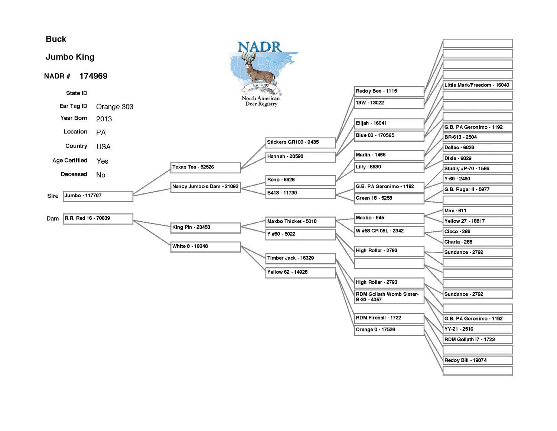 Jumbo King Whitetail buck